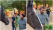 ಪ್ರೀತಿಯ ಕುದುರೆ ಜೊತೆ ಸೊಪ್ಪು ತಿಂದ ಸಲ್ಮಾನ್: ವಿಡಿಯೋ ವೈರಲ್
