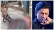 ಸತ್ತ ತಾಯಿಯನ್ನು ಎಬ್ಬಿಸುತ್ತಿದ್ದ ಪುಟ್ಟ ಕಂದಮ್ಮನ ಕೈ ಹಿಡಿದ ಶಾರುಖ್ ಖಾನ್