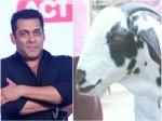 Bakrid Special Gorakhpurs Goat Salman Khan Priced At Rs 8 Lakh