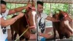ವಿಡಿಯೋ ವೈರಲ್: ಕುದುರೆ ಆರೈಕೆಯಲ್ಲಿ ಡಿ ಬಾಸ್ ದರ್ಶನ್