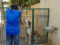 Ambareesh S Beloved Pet Dogs Kanvarlal And Bul Bul