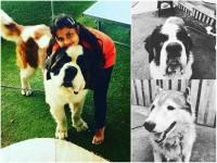 Upendra Daughter Aishwarya Upendra Loves Her Dogs