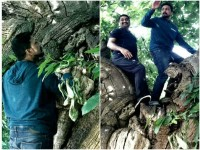 Kichcha Sudeep Has Expressed His Hapiness About Climbed A Tree After Decades