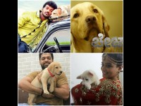 Dogs Are Playing Important Roles In Kannada Cinema
