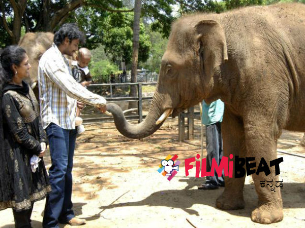 challenging-star-darshan-adopts-elephant-and-tiger-at-mysuru-zoo