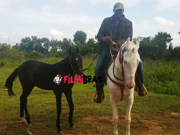 Challenging Star Darshan Rides A New Horse In His Farm House