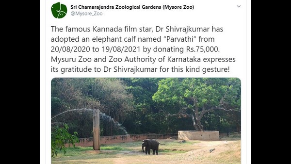 Kannada actor Shiva rajkumar has adopted an elephant calf named Parvathi