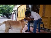 http://kannada.filmibeat.com/img/2015/06/08-1433759859-jaggesh4.jpg