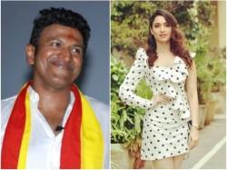 Will Tamannaah Bhatia Play Female Lead Role In Yuvarathna Kannada Movie